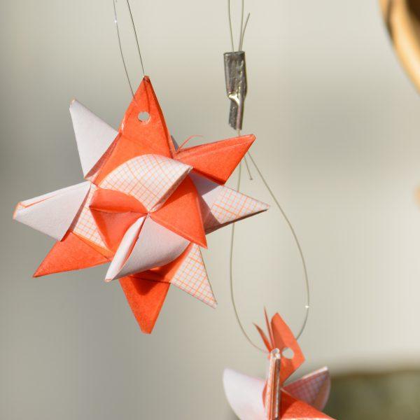 Stern Orange-Weiß